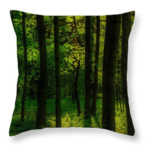 Background Throw Pillow featuring the photograph Sunlight In Forest by Michael Goyberg