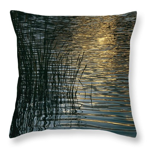 Reflections Throw Pillow featuring the photograph Sunlight Reflects On Rippled Water by Raul Touzon