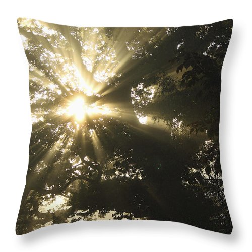 Cahir Throw Pillow featuring the photograph Sunlight Through Tree Cahir, County by Trish Punch
