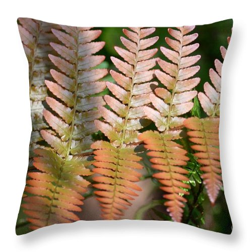 Sunlit Throw Pillow featuring the photograph Sunlit Red Fern by Maria Urso