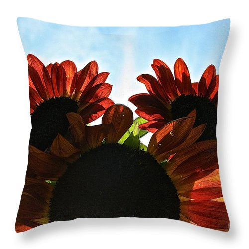 Outdoors Throw Pillow featuring the photograph Sunny Trio by Susan Herber