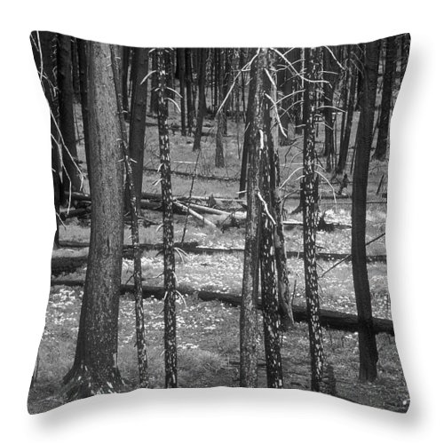 Throw Pillow featuring the photograph Recovery by Sandra Bronstein