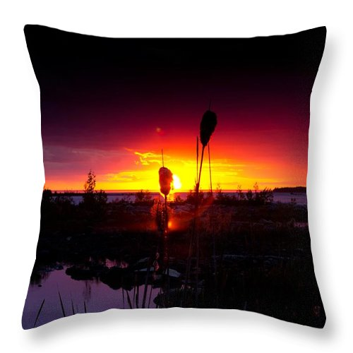 Cat Tail Throw Pillow featuring the photograph Sunset Cat Tail by Cale Best