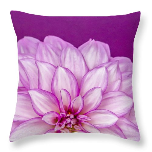 Dahlia Throw Pillow featuring the photograph Sunset Dahlia 3 by Albert Seger