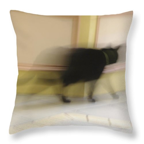 Cat Throw Pillow featuring the photograph Super Kitty by Marilyn Wilson
