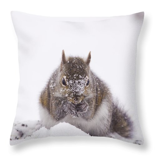 Squirrel Throw Pillow featuring the photograph Suppers Cold by Marty Maynard