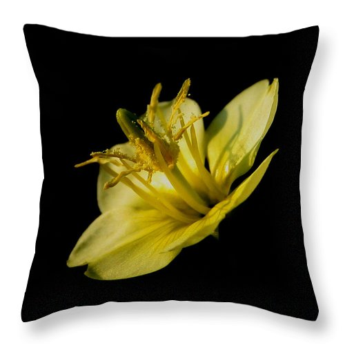 Flower Throw Pillow featuring the photograph Suspended by Karen Harrison