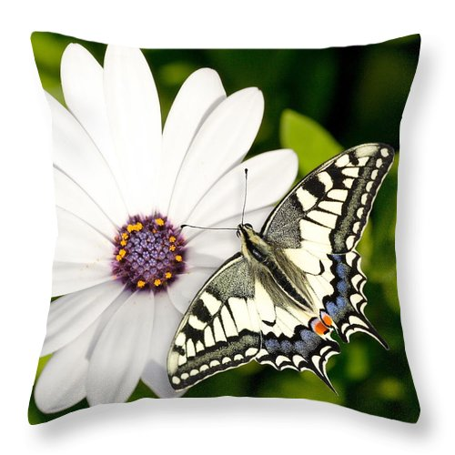 Nature Throw Pillow featuring the photograph Swallowtail Butterfly by Mark Heywood