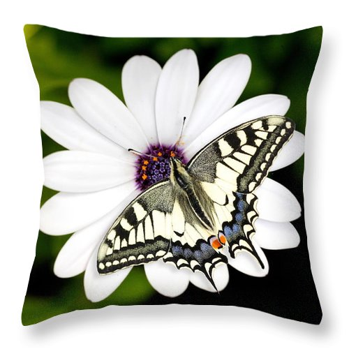 Nature Throw Pillow featuring the photograph Swallowtail Butterfly Resting by Mark Heywood