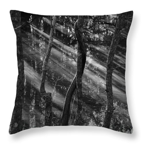 Swamp Throw Pillow featuring the photograph Swamp At Sunset by Melody Jones