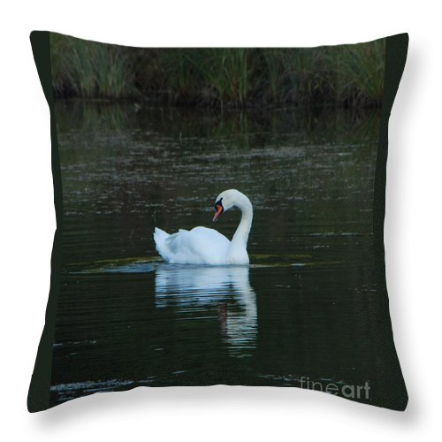 Water Throw Pillow featuring the photograph Swan Reflection by Grace Grogan
