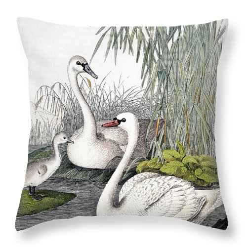 1850 Throw Pillow featuring the photograph Swans, C1850 by Granger