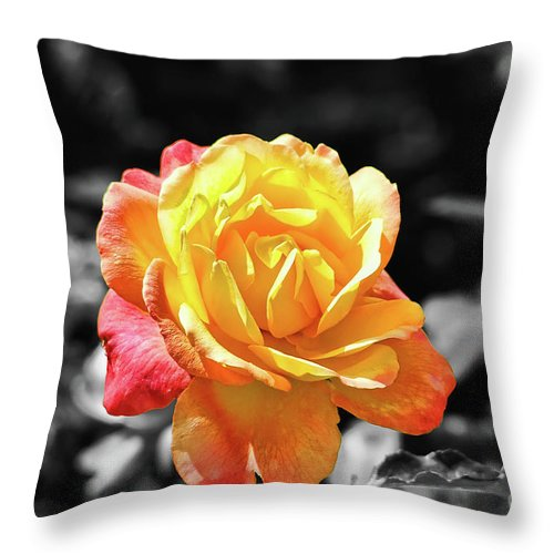 Sweet Aroma Throw Pillow featuring the photograph Sweet Aroma by Mariola Bitner
