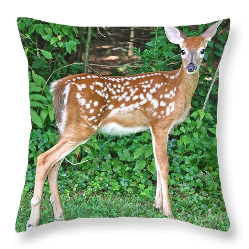 Deer Throw Pillow featuring the photograph Sweet Little Fawn by Mary Anne Williams