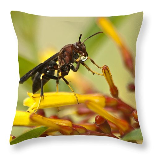 Wasp Throw Pillow featuring the photograph Sweet Morning Dew by Carolyn Marshall