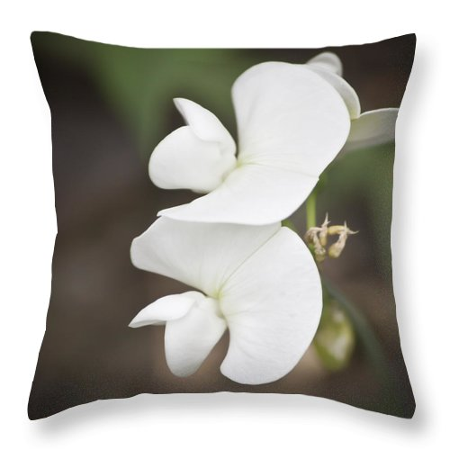 Sweet Pea Throw Pillow featuring the photograph Sweet Peas Squared 2 by Teresa Mucha