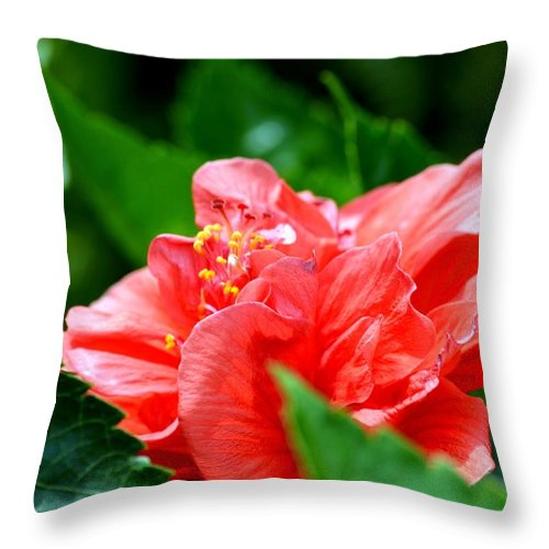 Sweetheart Throw Pillow featuring the photograph Sweetheart Red by Maria Urso