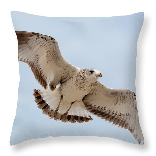 Wildlife Throw Pillow featuring the photograph Swooping In For A Meal by Kenneth Albin