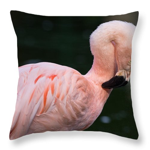 Bird Throw Pillow featuring the photograph Taking A Bow by Greg Nyquist