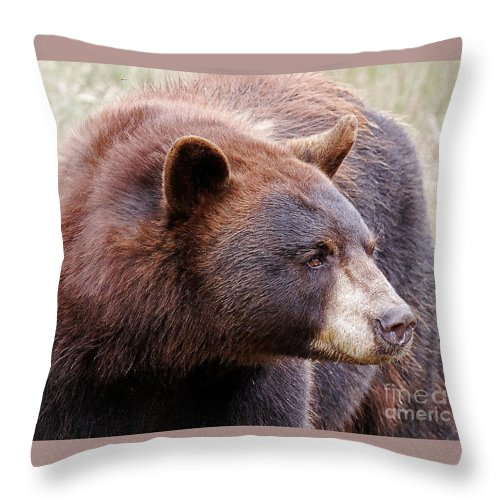 Bear Throw Pillow featuring the photograph Taking A Look by Lloyd Alexander