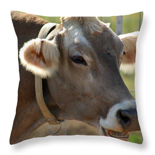 Animals Throw Pillow featuring the photograph Talking Cow by LeeAnn McLaneGoetz McLaneGoetzStudioLLCcom