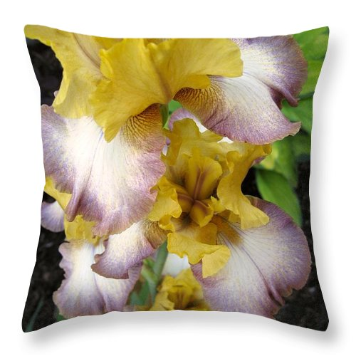 Bearded Iris Throw Pillow featuring the photograph Tall Bearded Iris Named Butterfingers by J McCombie
