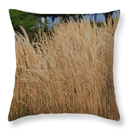 Nature Throw Pillow featuring the photograph Tall Grass by Mark McReynolds