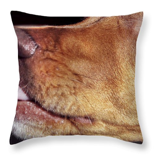 Dog Throw Pillow featuring the photograph Tasting The Air by Jason Politte
