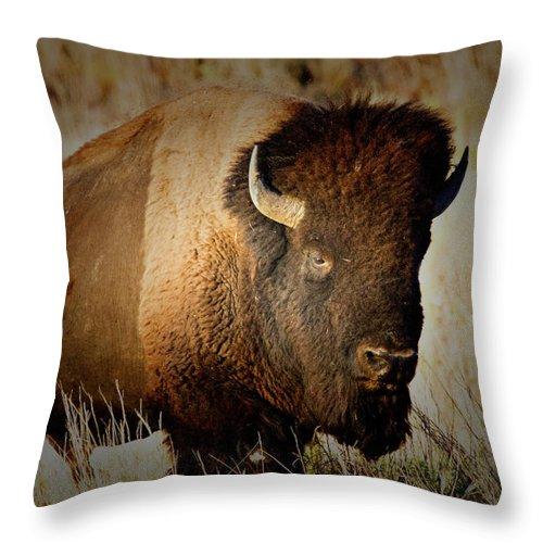 Bull Throw Pillow featuring the photograph Taurus by Douglas Barnard