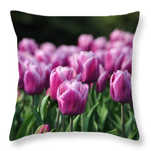 Tulip Throw Pillow featuring the photograph Taylor's Tulips by Trish Tritz