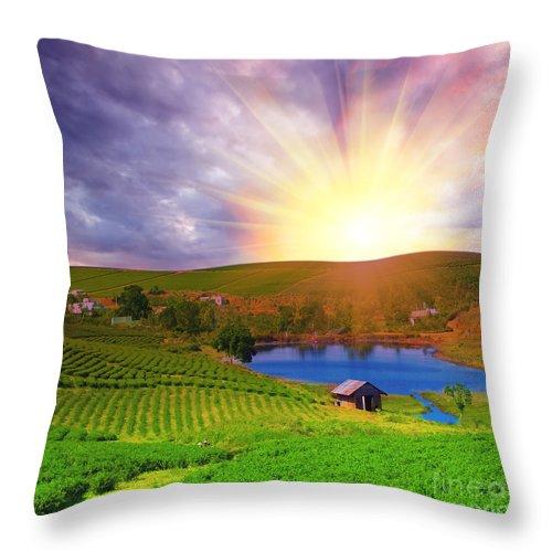 Sun Throw Pillow featuring the photograph Tea Plantation by MotHaiBaPhoto Prints