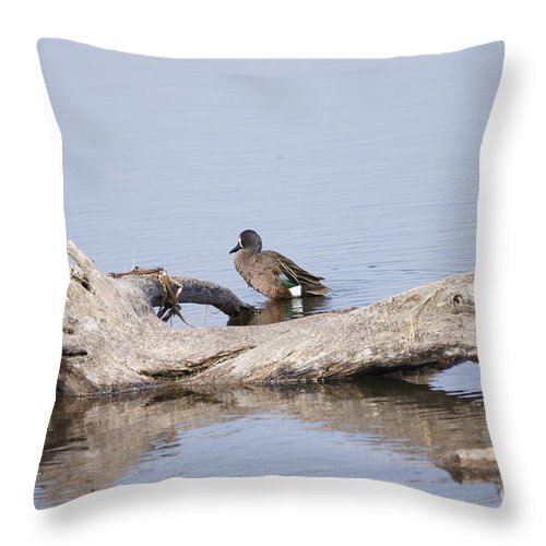 Teal Throw Pillow featuring the photograph Teal On A Stump by Lori Tordsen