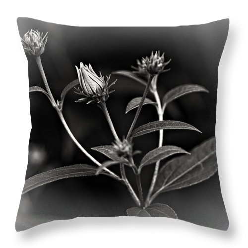 Weed Throw Pillow featuring the photograph Teenagers Bw Vignette by Steve Harrington