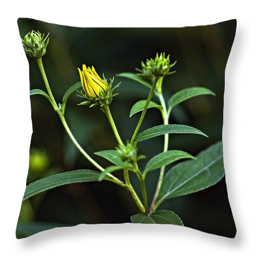 Weed Throw Pillow featuring the photograph Teenagers by Steve Harrington