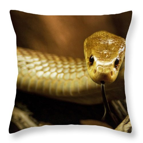 Snake Throw Pillow featuring the photograph Tempter by Andrew Paranavitana