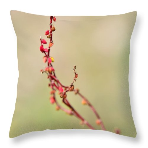 Bush Throw Pillow featuring the photograph Tenderness In Japanese Style by Michael Goyberg