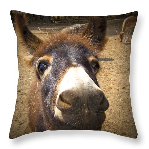 Donkey Throw Pillow featuring the photograph That Looks Eye-popping Good by Douglas Barnard