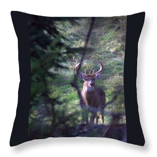 Deer Throw Pillow featuring the photograph The Boss by Greg DeBeck