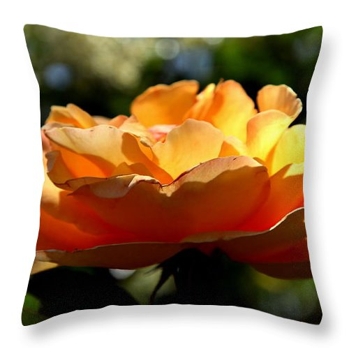Roses Throw Pillow featuring the photograph The Bronze Star by Karen Wiles