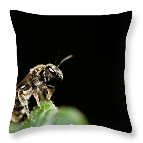 Bug Throw Pillow featuring the photograph The Bug by Danielle Silveira