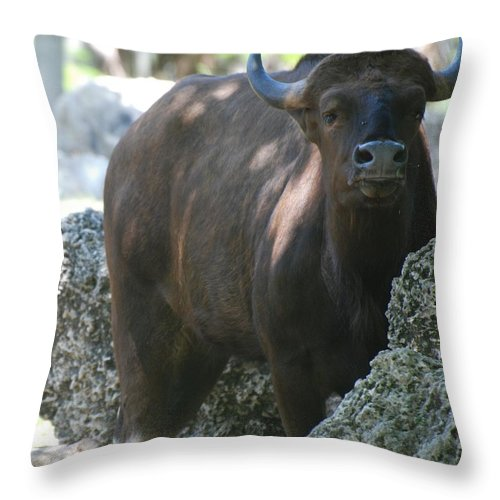Animal Throw Pillow featuring the photograph The Bull Moose by Rob Hans