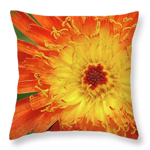 Nature Throw Pillow featuring the photograph The Devil's Tongue by Susan Capuano