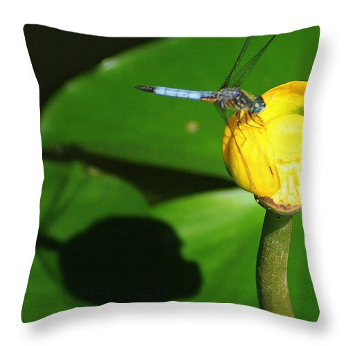 Dragonfly Throw Pillow featuring the photograph The Dragonfly And Its Shadow by Laurel Talabere
