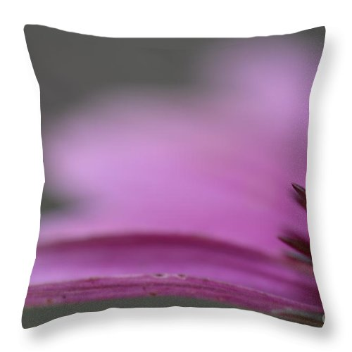 Coneflower Throw Pillow featuring the photograph The Dreamer by Traci Cottingham