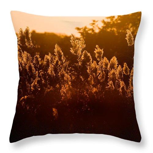 Fire Island Throw Pillow featuring the photograph The Dunes- Fire Island by Rick Berk