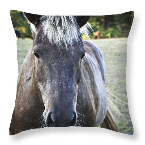 Horses Throw Pillow featuring the photograph The Farmers Horse by Kim Henderson