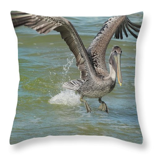 Pelican Throw Pillow featuring the photograph The Fishing Is Good by Deborah Benoit