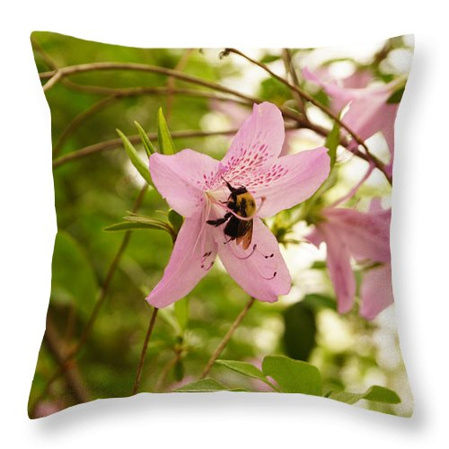 Bee Throw Pillow featuring the photograph The Flower And The Bumble Bee by J Jaiam