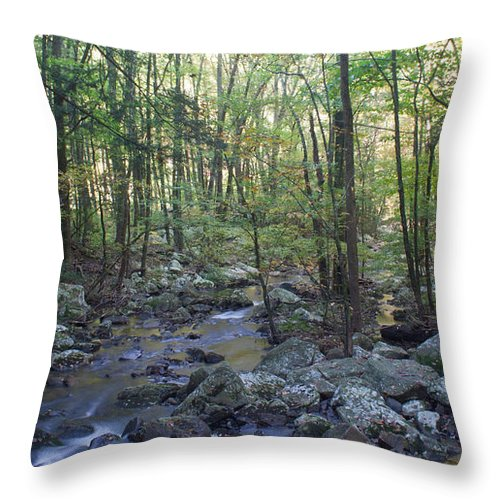 Forest Throw Pillow featuring the photograph The Forest by David Troxel