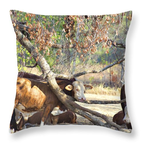 Cattle Throw Pillow featuring the photograph The Fork In The Tree by Douglas Barnard